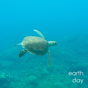 Sea turtle in blue water for Earth Day